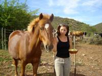 Pferde ausleihen/Horse Rental