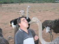 Strausse live/Ostrichs live